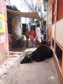 バラナシ(インド)