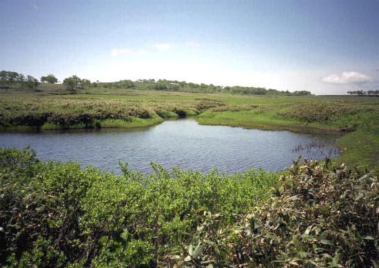 雨竜沼湿原内その1