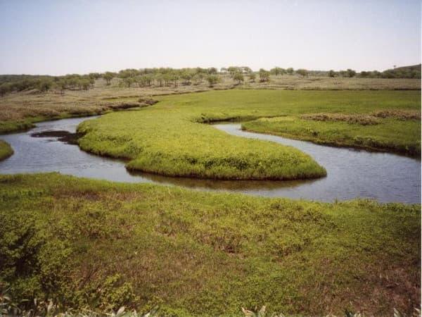 雨竜沼湿原内その2