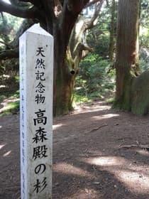 熊本県 天然記念物高森殿の杉