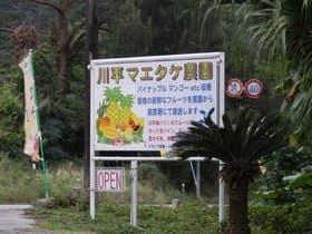 石垣島 川平マエタケ農園
