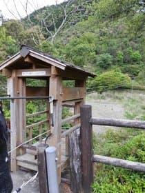 奈良県 十津川の野猿