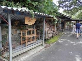高知県 SHADE TREEカフェ