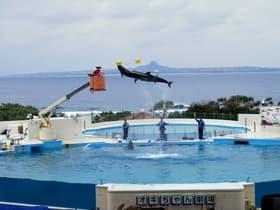 沖縄県 美ら海水族園