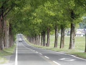 滋賀県 メタセコイア並木道