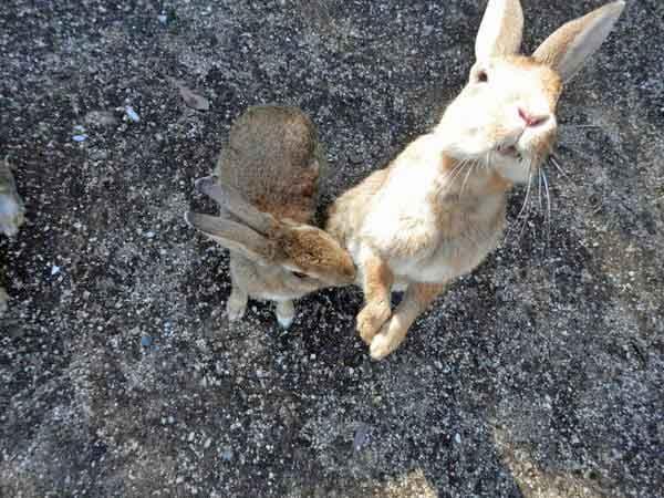 野生のウサギがいっぱい居る島???