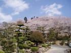 岡山県倉敷市種松山公園の桜