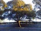 「ようこそ」の木