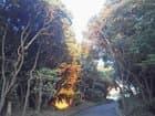 明石公園自然のスポットライト